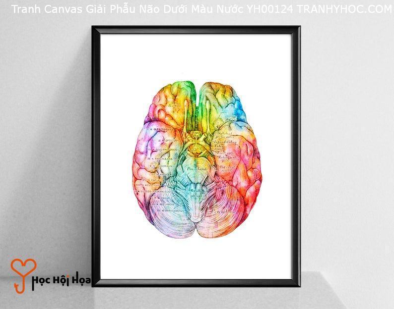 Tranh Canvas Giải Phẫu Não Dưới Màu Nước YH00124