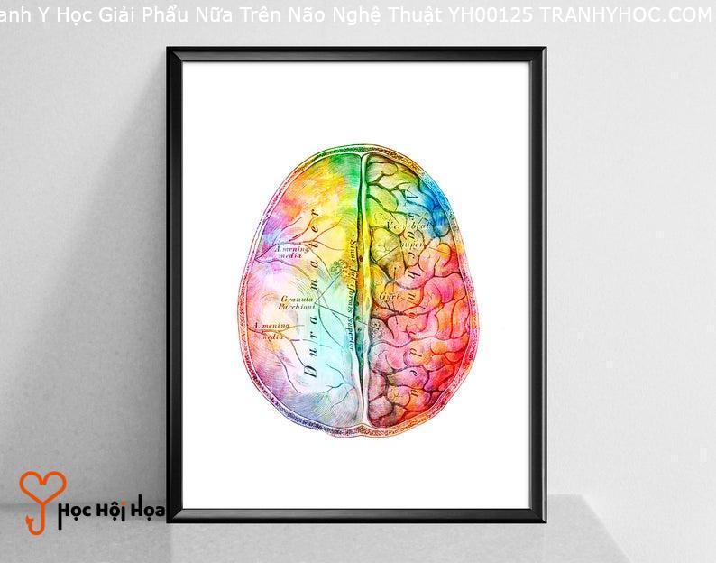 Tranh Y Học Giải Phẩu Nữa Trên Não Nghệ Thuật YH00125